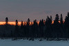 Butler Island trees at sunrise. 2017 April 16th.
