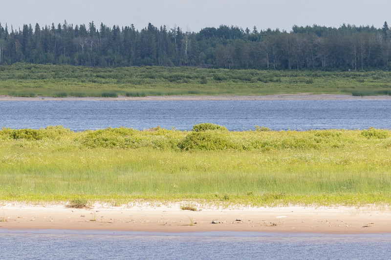 Lots of vegetation on sandbar.