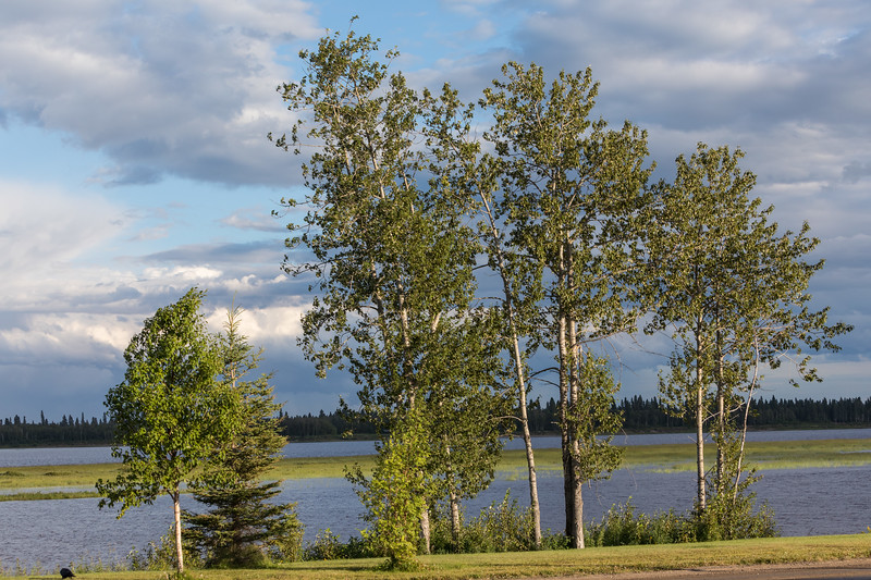 Trees along the Moose River as the sun comes out after the rain.