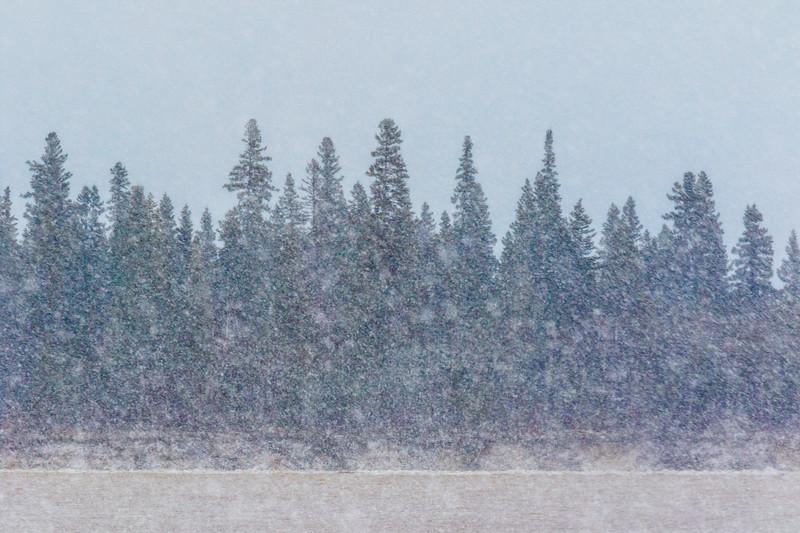 Snow falling on the Moose River at Moosonee 2017 April 29th. Arty interpretation high saturation.