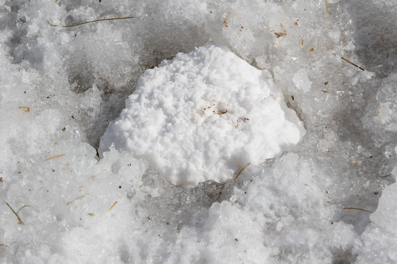 Lump of calcium that cut its way down through driveway ice.