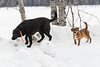 Friends come in all sizes. Two dogs along the Moose River in Moosonee.