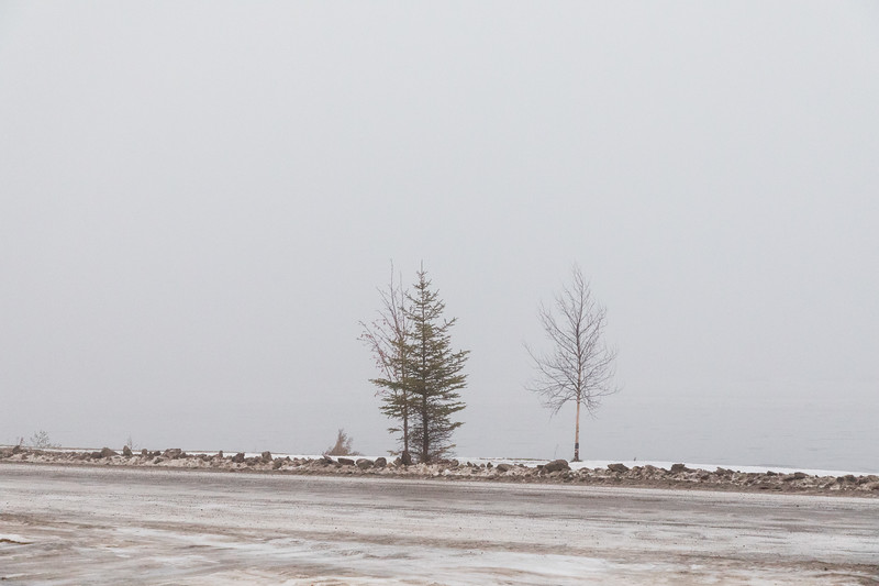 Trees along the Moose River in Moosonee with morning fog before sunrise. 2017 November 15th. White balance off snow.