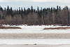 View across the Moose River to far side of sandbar where ice and water are flowing. 1215 noon 2017 April 28th.
