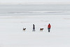 Two dogs and two people walking on the ice of the Moose River 2017 April 9th.