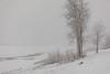 Moose River shoreline in light snow.