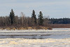South end of Butler Island. Ice flowing down river.
