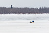 Snowmobile taxi on the Moose River at Moosonee 2017 April 3rd.