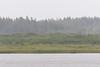 Looking across the Moose River in the rain from Moosonee.
