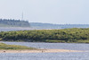 Looking up the Moose River from Moosonee. Note eagle on sandbar at lower centre.