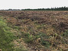 Land cleared by Moosonee Health Centre.