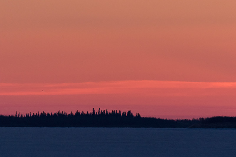 Bird down the Moose River before sunrise.