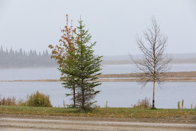 Trees along the Moose River as the first snow of the season falls.
