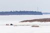 Snowmobile taxi crossing the Moose River 2017 April 9th.