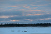 Trucks driving on the Moose River at Moosonee shortly after sunrise 2017 January 22nd.