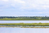 The intense greens of early summer. Looking across the Moose River towards the sandbar and Moose Factory.