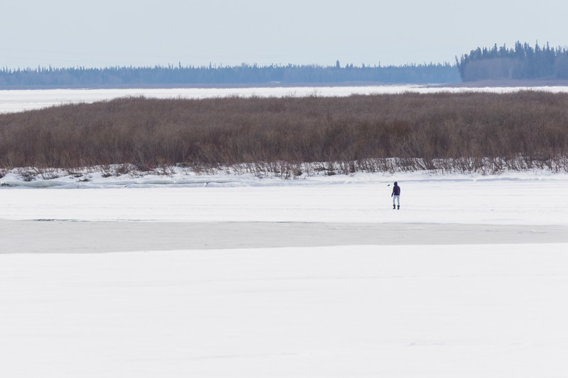 Person walking across the Moose River from Moosonee 2017 April 20th.