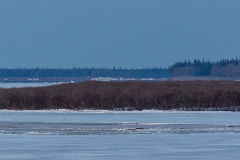 Looking up the Moose River before sunrise 2017 April 24th. Ice piles herald the coming of breakup.