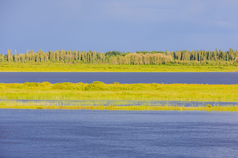 Intense greens of early summer on the sandbar and across the Moose River.