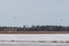 Two helicopters across the Moose River from Moosonee. 2017 April 24th.