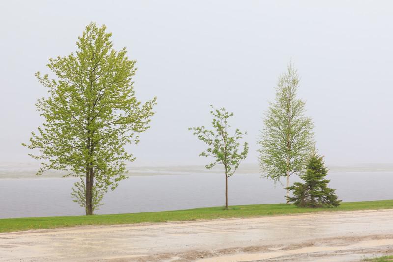 Rain along the Moose River in Moosonee 2017 June 8th.