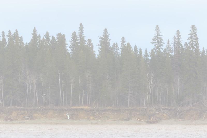 Butler Island as light snow diminishes.
