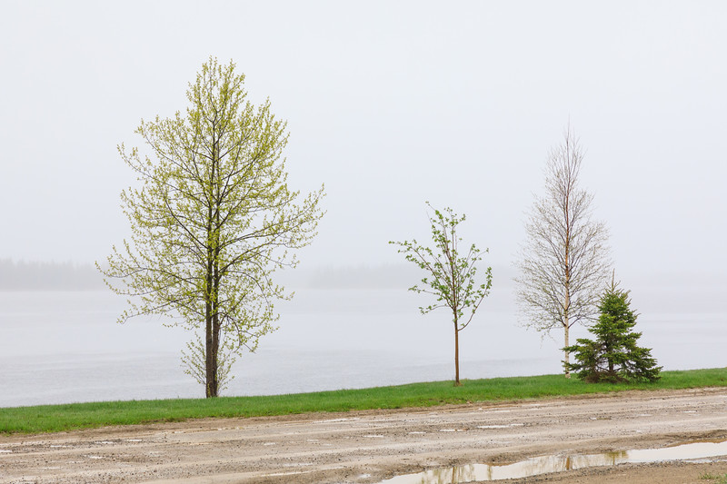 Another foggy wet morning in Moosonee. 2017 June 2nd.
