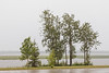 Trees along the Moose River in the rain.