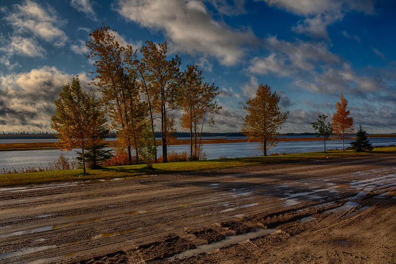 Trees along the Moose River. HDR efx dark.