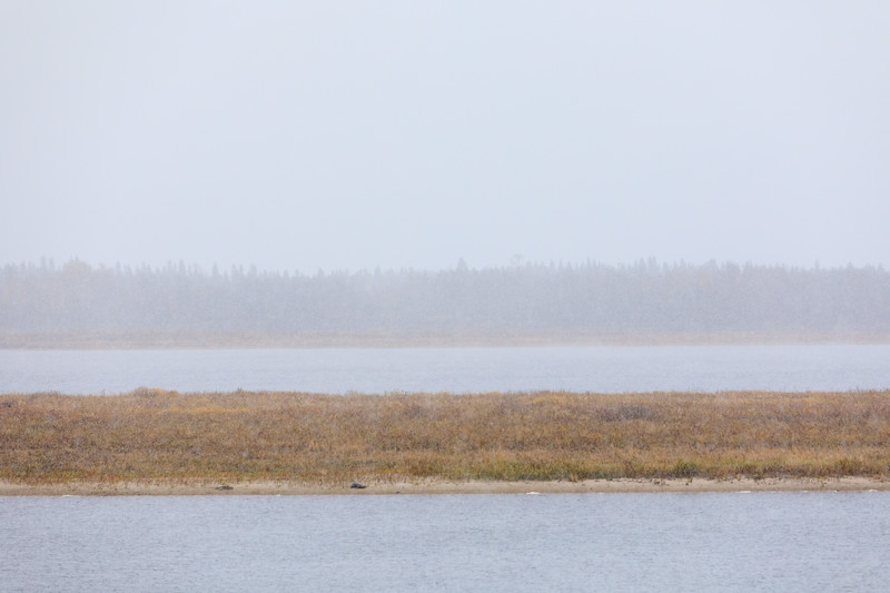 Looking across the Moose River as the first snow of the season falls. 2017 October 15th.