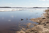 Moosonee shoreline almost bare of ice. High water. Looking up the river.