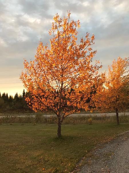 Trees around sunset at Moosonee Health Centre Backlit.