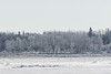 Frosted trees across the Moose River from Moosonee 2017 March 19th.
