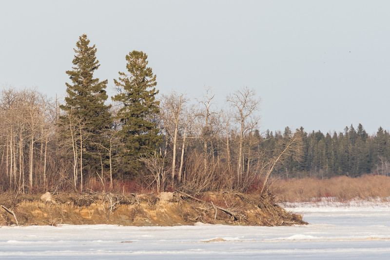 South end of Butler Island. Taken from river bank level to avoid heat distortion evident in shots taken at ice level.