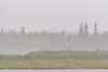 Looking across the Moose River in the rain.