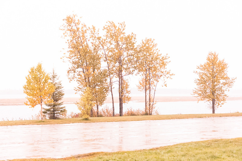 Trees along the Moose River in Moosonee on a rainy morning. Deliberately overexposed by 3 stops. Warmed up.