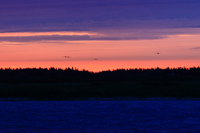 Geese across the river before sunrise.