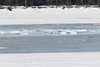 Ice floes in fresh ice on the Moose River