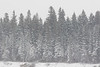 Snow covered trees across the Moose River on Butler Island.