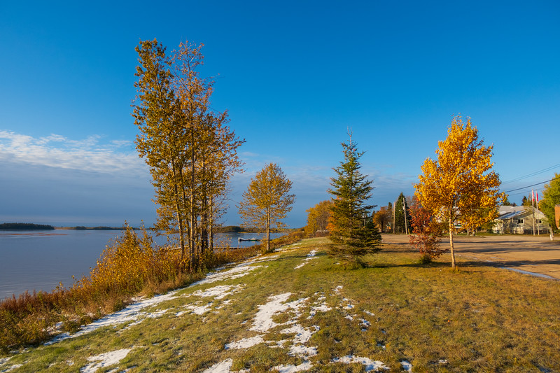 Trees along the Moose River and Revillon Road in Moosonee 2018 October 14.