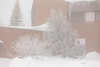 Bushes and trees covered in ice and snow at the Ontario Government Building in Moosonee.