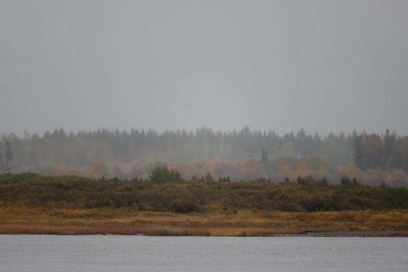 View across the Moose River on a wet morning.