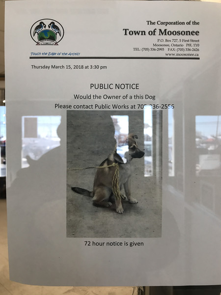 Sign about dog at Moosonee Northern