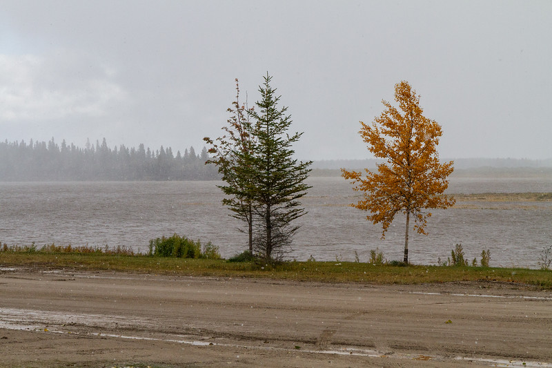 Trees along the Moose River in light snow 2018 October 4.