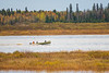 Canoe heading up the Moose River 2018 October 14.