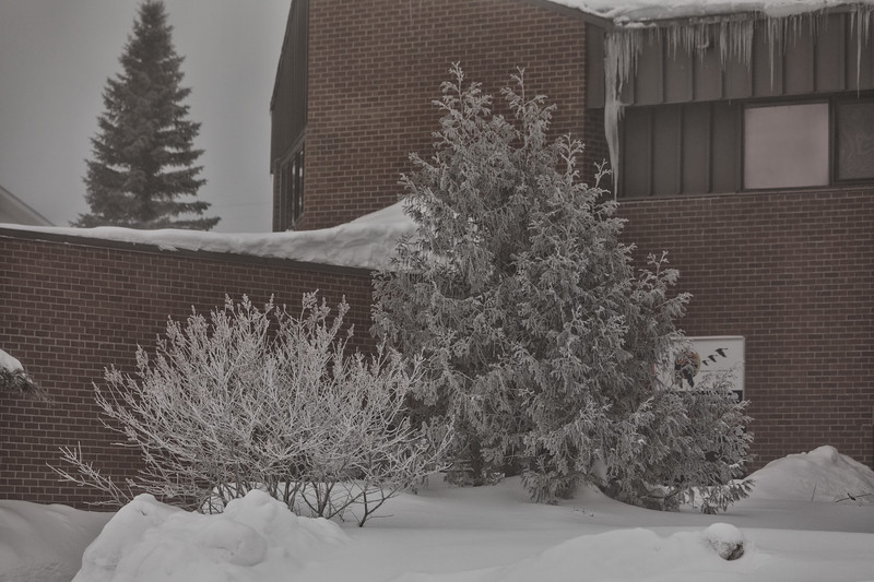 Bushes and trees covered in ice and snow at the Ontario Government Building in Moosonee. Color Efx pro dark contrast.