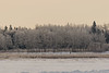 Frosted trees across the Moose River.