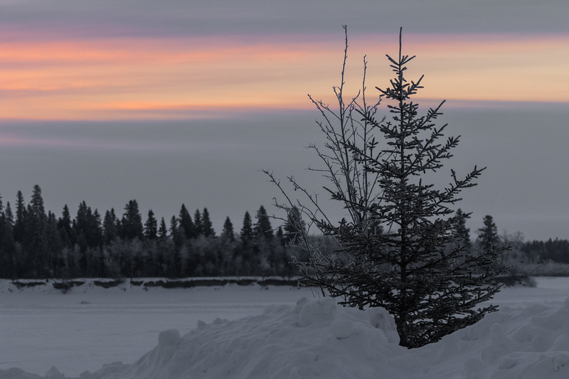 Trees along the Moose River before sunrise.