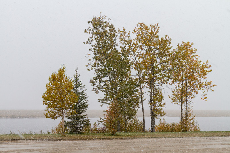 Trees along the Moose River in light snow 2018 October 6.