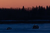 Vehicles on the Moose River just before sunrise 2018 January 24th.